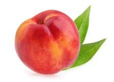 Nectarine fruit isolated Stock Photography