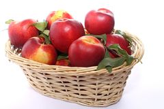 Nectarine peaches Stock Image