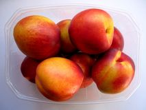 Nectarine Pummet. A case of ripe, juicy nectarines ready for eating stock photography