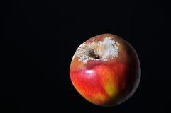 Nectarine putride Images libres de droits