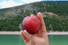 Peach in the hand by the lake stock photography