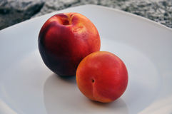 Nectarine and red plum fruit on a white dish Royalty Free Stock Image