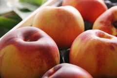 Nectarines. Stock Photography