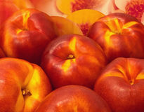Nectarines. Close-up of a bunch of nectarines Stock Images