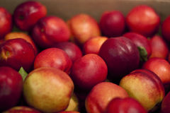 Nectarines. A heap of nectarines in a farmer's market stand Royalty Free Stock Images