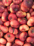 Nectarines. For image backgrounds and food illustrations Royalty Free Stock Images