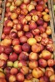 Nectarines royalty-vrije stock foto