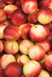 Nectarines. Many ripe nectarines, suitable for summer background Stock Image