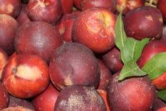 Nectarines Stock Afbeelding