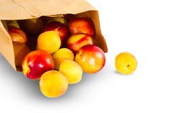 Nectarines, apples and apricots Royalty Free Stock Photo