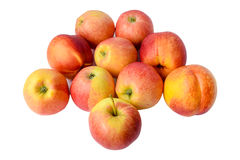 Nectarines with apples. Royalty Free Stock Images
