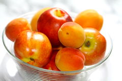 Nectarines and apricots. Freshly picked in a glass bowl stock photos