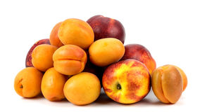 Nectarines and apricots on a white background stock photo