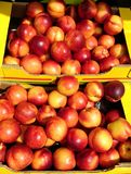 Nectarines in boxes. Yellow nectarine fruit in boxes outside a green grocery store Royalty Free Stock Photography