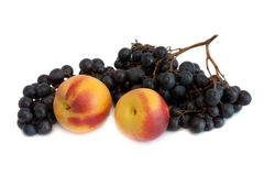 Nectarines and bunch of grapes Stock Photo