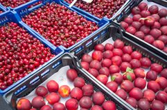 Nectarines and cherries Stock Photography