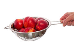 Nectarines  in a colander Royalty Free Stock Images