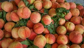 Nectarines on display in the fruit shop royalty free stock photography