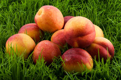 Nectarines in the grass. Stock Image