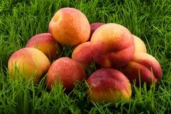 Nectarines in het gras. Stock Afbeelding