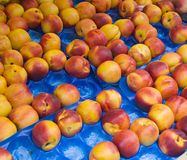 Nectarines at market Royalty Free Stock Image