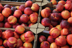 Nectarines at a market Royalty Free Stock Image