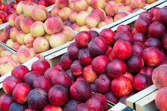 Nectarines and peaches Royalty Free Stock Photos