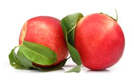 Nectarines perfect with leaves Stock Photography
