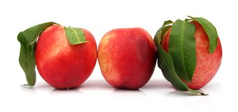 Nectarines perfect with leaves. The nectarine is a cultivar group of peach that has a smooth, fuzzless skin. Though fuzzy peaches and nectarines are commercially Stock Photography
