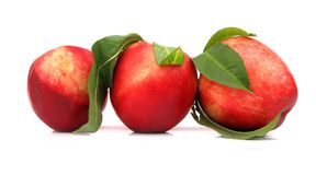 Nectarines perfect with leaves Royalty Free Stock Image
