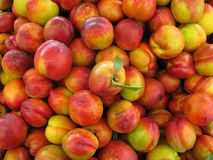 Nectarines perfect with leaves. The nectarine is a cultivar group of peach that has a smooth, fuzzless skin. Though fuzzy peaches and nectarines are commercially Royalty Free Stock Image
