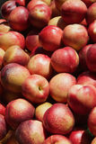 Nectarines Pile Royalty Free Stock Photography
