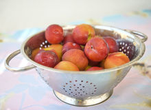 Nectarines in a rinse strainer Stock Photo