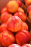 Nectarines for sale on a market Stock Photography