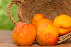 Nectarines Spilled from an Overturned Basket Royalty Free Stock Images