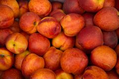 Nectarines yellow with a red color stock photography