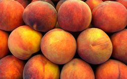 Necterines Image stock