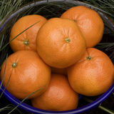 Oranges in bowl Royalty Free Stock Photography