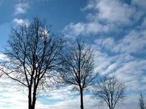 Nedåtriktad tree Arkivbild
