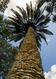 nedanför palmträd Fotografering för Bildbyråer