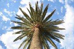 nedanför palmträd Arkivfoto