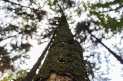 nedanför tree Fotografering för Bildbyråer