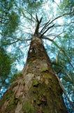 nedanför tree royaltyfri foto