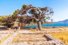 Nedböjt sörja trädet Arkivfoto