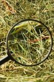 neddle haystack Стоковое Фото