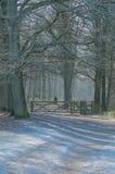 Nederländerna - De Bilt royaltyfri fotografi