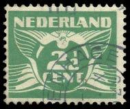 Nederländerna fåglar som flyger duvan Arkivfoto