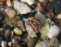 Nederländerna för mun för krabbafokusensling Arkivbilder