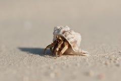 Nederländerna för mun för krabbafokusensling Fotografering för Bildbyråer