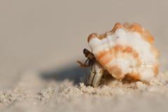 Nederländerna för mun för krabbafokusensling Royaltyfri Bild